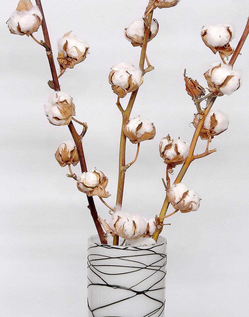 Naturalne, kwitnące gałązki bawełny do wazonu